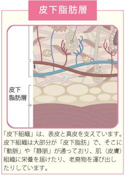 皮下脂肪層